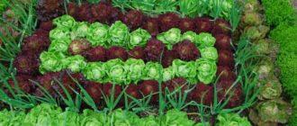 Возделывание садово-огородных культур