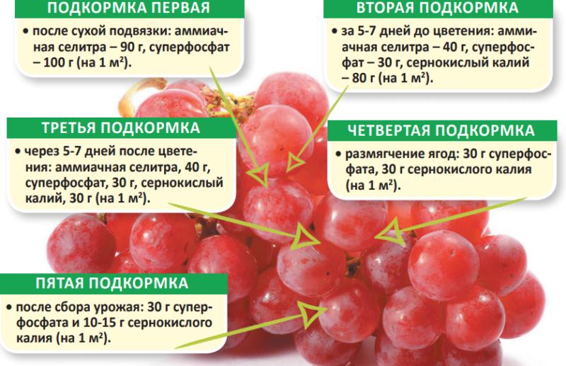 Чем удобрять виноград