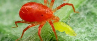 Профилактика паутинного клеща