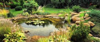 Растения для дачного пруда
